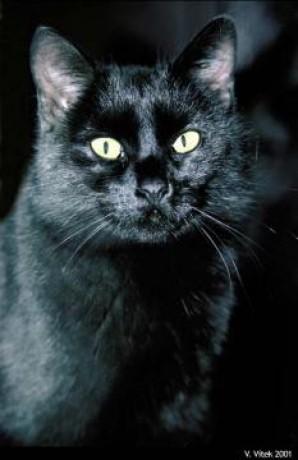 www černé kočičky